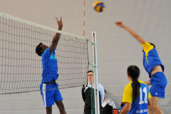 Volleyball-TVD-TVL038